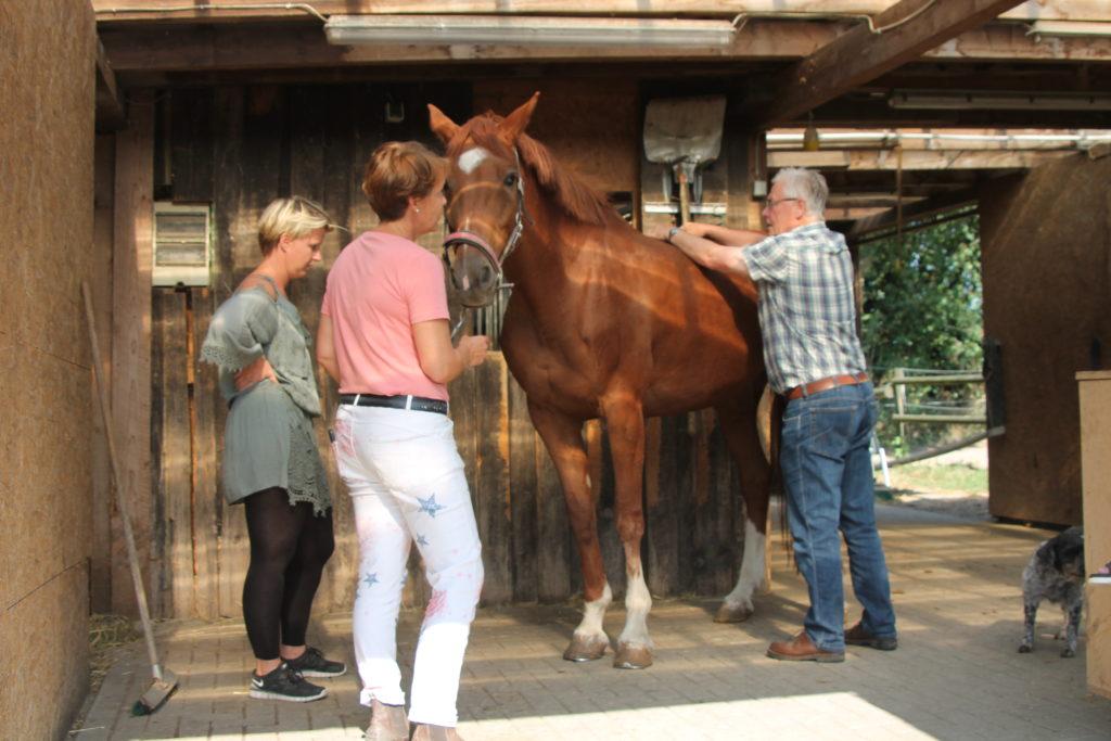 Dr. Gliem, Chiropraktik, Pferdechiropraktiker Eifel, Pferdechiropraktiker, Pferde Chiropraktiker, Pferdechiropraktiker NRW, Ostheopatische Rückenbehandlung beim Pferd, Rückenprobleme beim Pferd lösen, Hilfe bei unklaren Lahmheiten beim Pferd, Hilfe bei Taktfehlern beim Pferd, Hilfe bei Spat, Hilfe bei Kissing Spines, Hilfe bei Ataxie, Osteopath, Pferd Lahmheit, Osteopath NRW, Rückenmobilisation, Rückengesundheit Pferde, Chiropraktiker NRW, Osteopathie für Pferde, Rückenblockaden lösen, alternative Hilfe bei Rückenproblemen, Dorn Therapeut, Rückenempfindlichkeit Pferd
