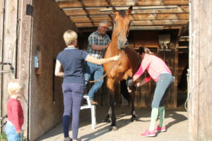 Pferdechiropraktiker Erftkreis, Pferdechiropraktiker, Pferde Chiropraktiker, Pferdechiropraktiker NRW, Ostheopatische Rückenbehandlung beim Pferd, Rückenprobleme beim Pferd lösen, Hilfe bei unklaren Lahmheiten beim Pferd, Hilfe bei Taktfehlern beim Pferd, Hilfe bei Spat, Hilfe bei Kissing Spines. Hilfe bei Ataxie