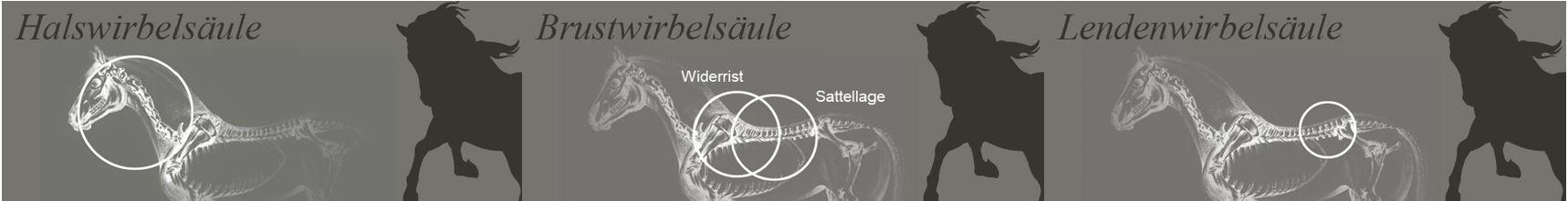 Dr. Gliem, Chiropraktik, Pferdechiropraktiker Eifel, Pferdechiropraktiker, Pferde Chiropraktiker, Pferdechiropraktiker NRW, Ostheopatische Rückenbehandlung beim Pferd, Rückenprobleme beim Pferd lösen, Hilfe bei unklaren Lahmheiten beim Pferd, Hilfe bei Taktfehlern beim Pferd, Hilfe bei Spat, Hilfe bei Kissing Spines, Hilfe bei Ataxie, Osteopath, Pferd Lahmheit, Osteopath NRW, Rückenmobilisation, Rückengesundheit Pferde, Chiropraktiker NRW, Osteopathie für Pferde, Rückenblockaden lösen, alternative Hilfe bei Rückenproblemen, Dorn Therapeut, Rückenempfindlichkeit Pferd, Rückenbehandlung Pferd; Rückenschmerzen beim Pferd, Rückenbehandlung beim Pferd, Pferdechiropraktiker NRW, Rittigkeitsprobleme Pferd, Spat Ataxie behandeln, Taktfehler Pferd, Schmerzen Pferd, Pferdetierarzt, Dr. Gliem, Pferdetierarzt, Chiropraktik, Pferdechiropraktiker Eifel, Pferdechiropraktiker, Pferde Chiropraktiker, Pferdechiropraktiker NRW, Ostheopatische Rückenbehandlung beim Pferd, Rückenprobleme beim Pferd lösen, Hilfe bei unklaren Lahmheiten beim Pferd, Hilfe bei Taktfehlern beim Pferd, Hilfe bei Spat, Hilfe bei Kissing Spines, Hilfe bei Ataxie, Osteopath, Pferd Lahmheit, Osteopath NRW, Rückenmobilisation, Rückengesundheit Pferde, Chiropraktiker NRW, Osteopathie für Pferde, Rückenblockaden lösen, alternative Hilfe bei Rückenproblemen, Dorn Therapeut, Rückenempfindlichkeit Pferd, Pferd, Rücken, Wirbelsäule, Wirbelschiestand Pferd, Einrenker, Pferdeosteopath, Osteopath Pferd, Rittigkeitsprobleme Pferd, Lahmheit Pferd, Taktfehler Pferd, Rückenschmerzen Pferd, Pferdechiropraktiker, Tierarzt Pferd, Pferdetierarzt, Rückenbehandlung Pferd, Rittigkeitsprobleme Pferd, Rückenschmerzen Pferd, Schmerzen Pferd, Alternativmedizin Pferd, Pferdegesundheit